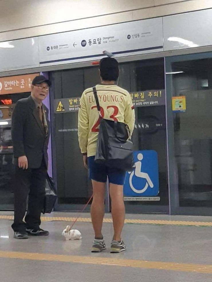 Only in ASIA...! (30 Pics)