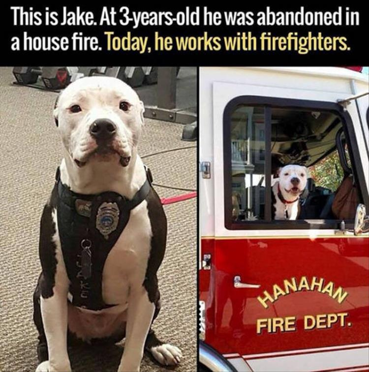 Faith In Humanity Restored (10 Pics)