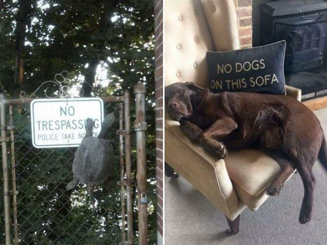 Funny Animals: 25 Animals Who Don't Care About Stupid Human Rules