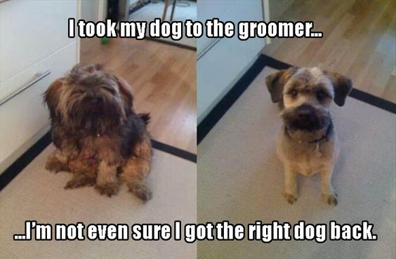 Funny Pictures - 12 Pics