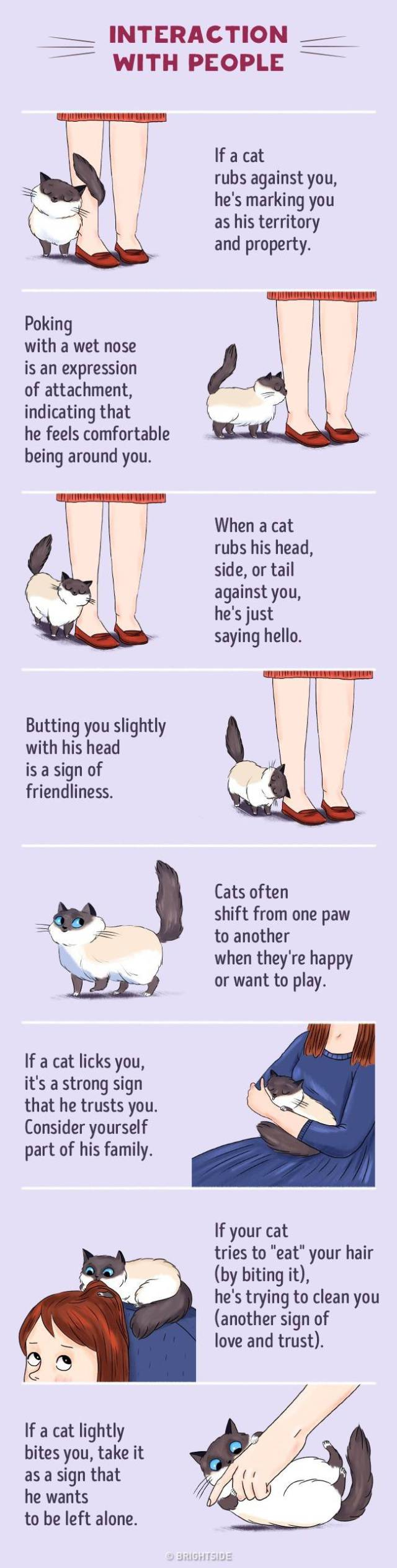 Here's How You Can Understand Your Cat Better (6 pics)