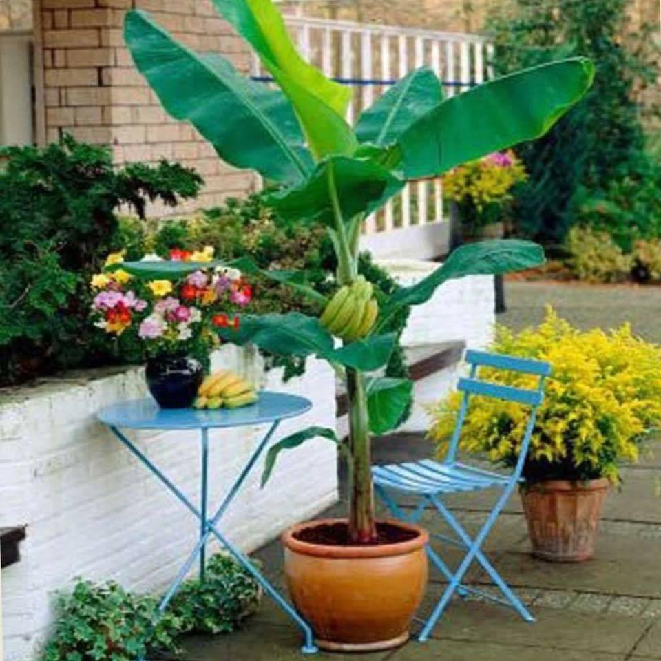 Home Garden Ideas (100+ Pics)
