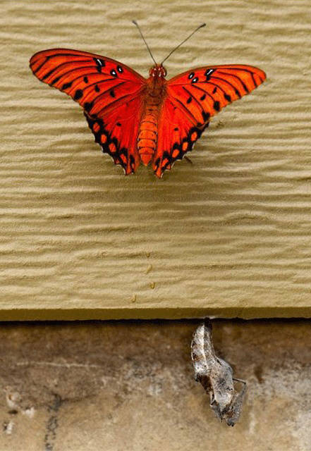 How A Butterfly Is Born - The Lifecycle of a Butterfly  in 10 pics