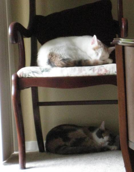 It's Unbelievable How These Cats Are Perfectly Synchronized (13 pics)
