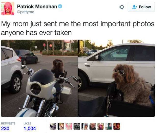 Sometimes Dogs' Lives Are More Full Than Those Of Humans (23 pics)