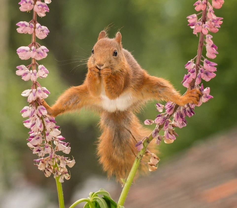 OMG - Adorable Squirrel Showing Off Its Acrobatic Skills