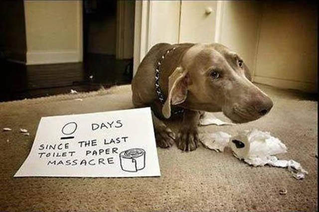 The Ultimate Collection Of Funny Pet Shaming Pics (26 pics)