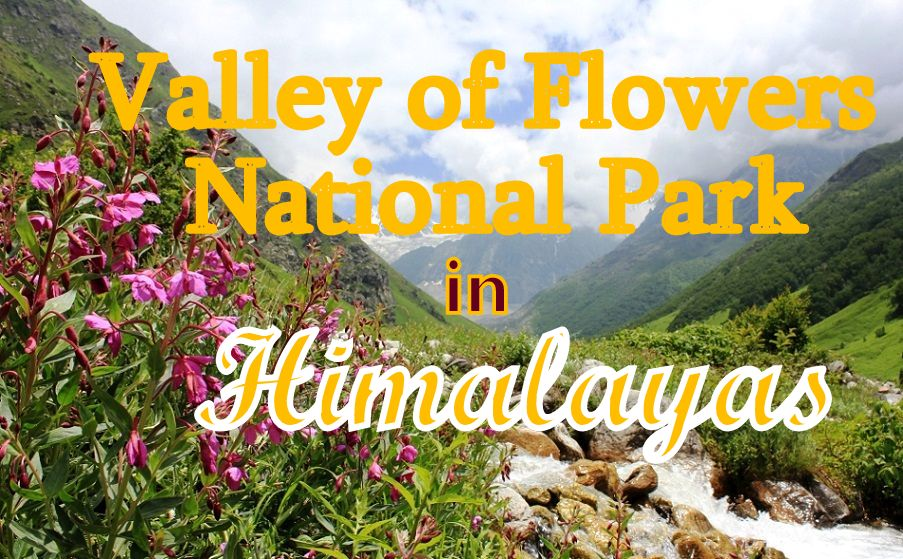 Valley of Flowers National Park in Himalayas