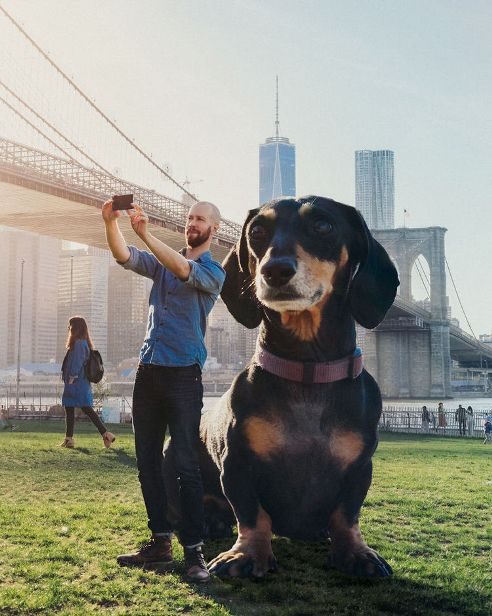 This Man Photoshops His Dachshund Dog to the size she thinks she is
