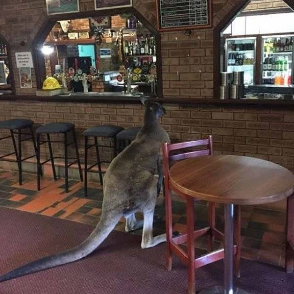 This Is So Australian: Welcome To Australia (41 pics)