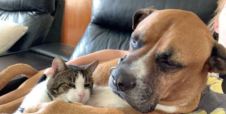 Who Said Cats And Dogs Are Enemies? (17 pics + 1 gif)